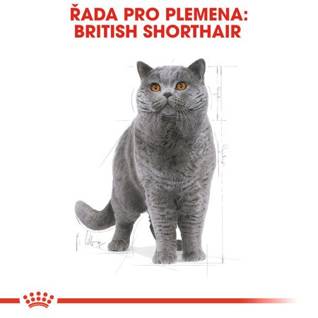 ROYAL CANIN British Shorthair 10kg